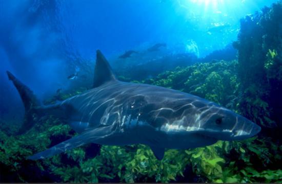 最大的掠食性鱼类