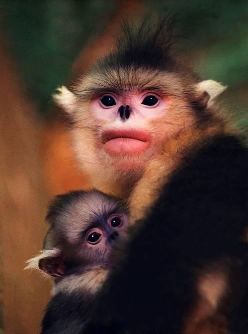 中国著名野生动物摄影师使用希捷硬盘备份和保护中国珍贵的野生动物