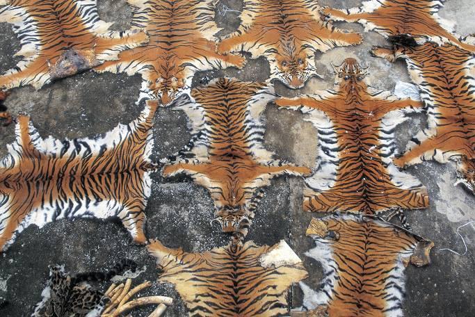 中国著名野生动物摄影师使用希捷硬盘备份和保护中国珍贵的野生动物影
