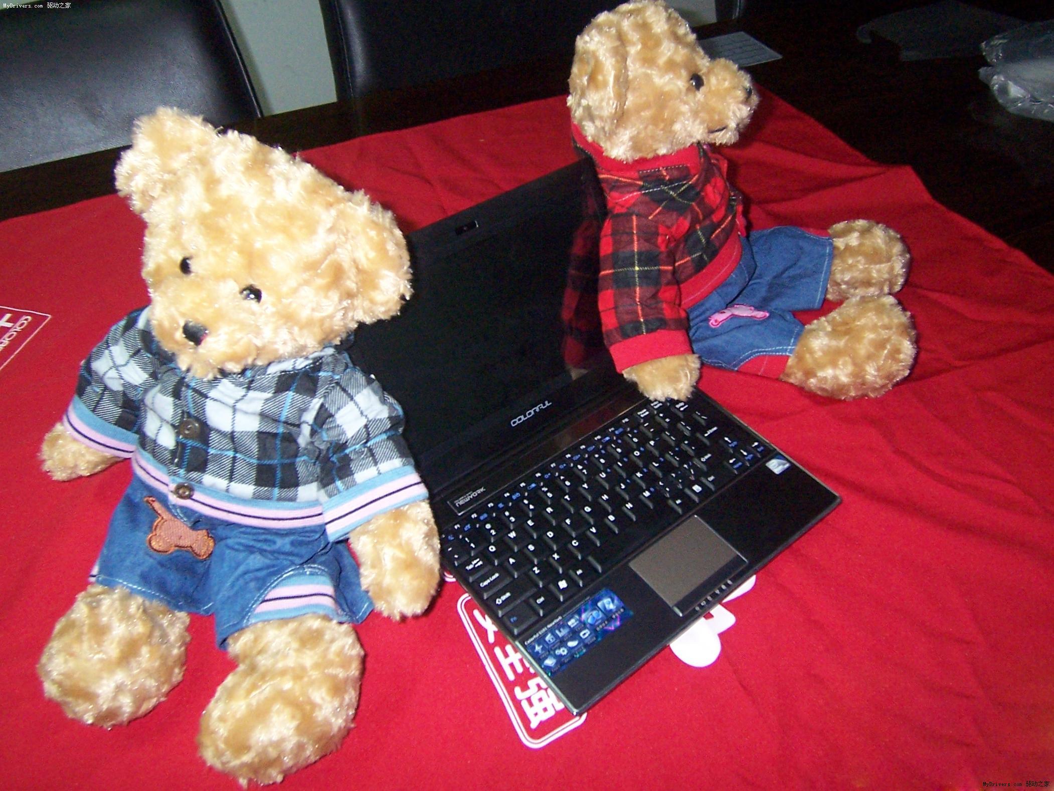 可爱泰迪熊抱回家 七彩虹纽约本大促销