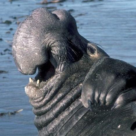 世界上最丑陋的13种动物