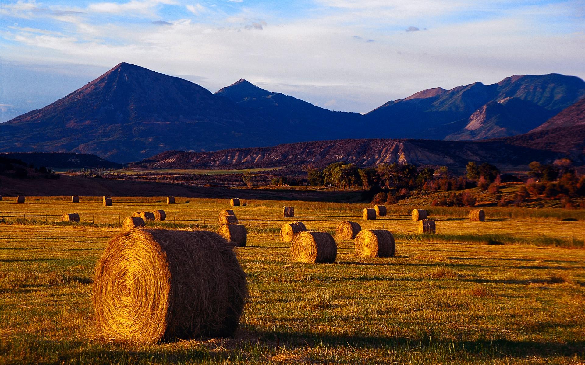 """收获的喜悦就像辛弃疾口中的的""""稻花香里说丰年,听取蛙声一片"""",收获的季节就像何其芳描述的"""" 放下饱食过稻香的镰刀,用背篓来装竹篱间肥硕的瓜果""""。一说到秋天,很多人脑海中想到的应该是收获的季节,是啊,秋天是小麦、瓜果等成熟的季节,是农民辛苦了一年收获的季节。 刚刚从秋天走过,你是否还带有一丝眷恋呢?微软今天就为着这份眷恋而推出了新的Windows 7主题""""收获季节""""。18张壁纸中呈现了金黄的小麦、丰盈的桃子、紫红的葡萄…&"""