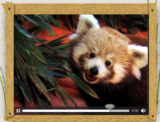Mozilla邀请小熊猫为Firefox 4宣传造势