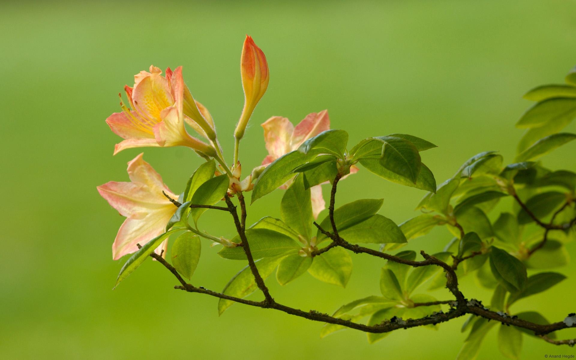 微信自然风景头像花朵