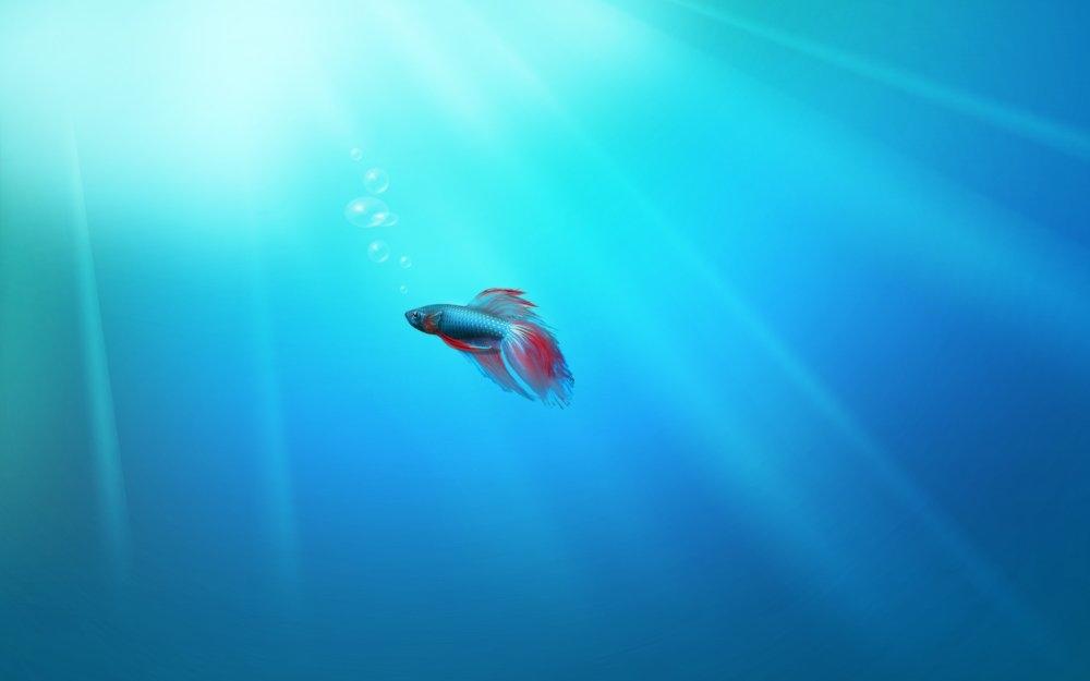 et的et鱼