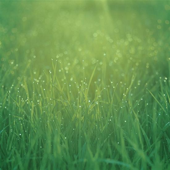 绿色小清新ppt素材