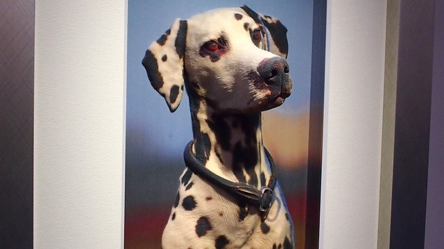动物爱好者或许会喜欢悬挂可爱的动物画