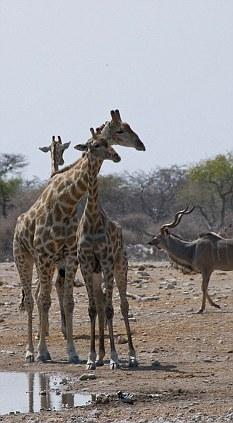 一亿年前的动物图片叫做什么