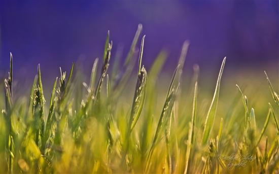 绝美Windows 7官方主题:《梦幻花园》