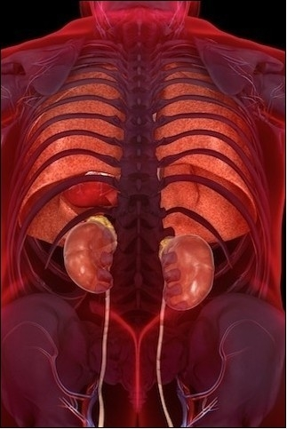 神奇的3D医学人体美图