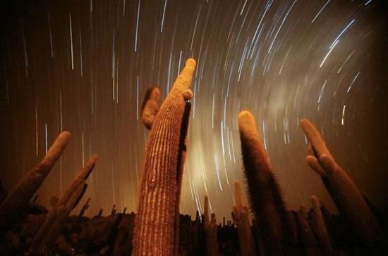 图片精选 巨型仙人掌触碰星空
