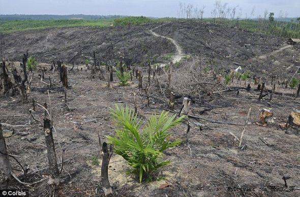 树木 砍伐 矢量图
