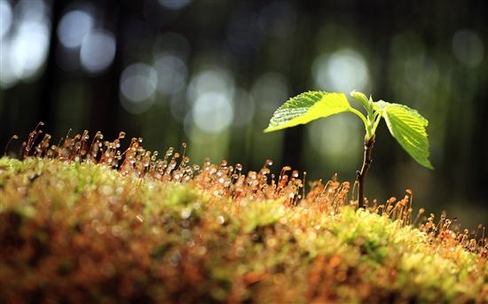 Windows 7绿色主题两则:《森林》《树苗》
