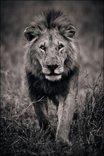 狂野的黑白非洲