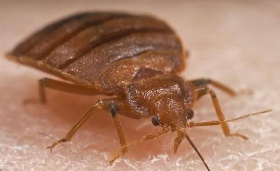 扁虱是甲壳类节肢动物