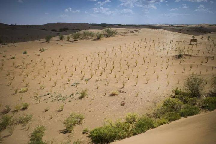 森林变沙漠图片